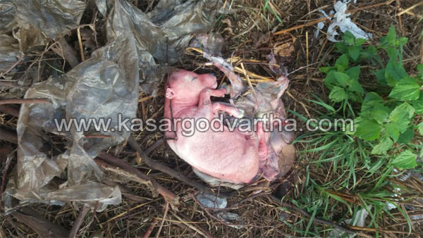Kasaragod, Kerala, River, cow, Cleaning, Mogral, Slaughtered Cow's waste dumping to river.