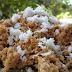Manfaat Ekstrim Kandungan Nutrisi Nasi Tiwul Bagi Tubuh