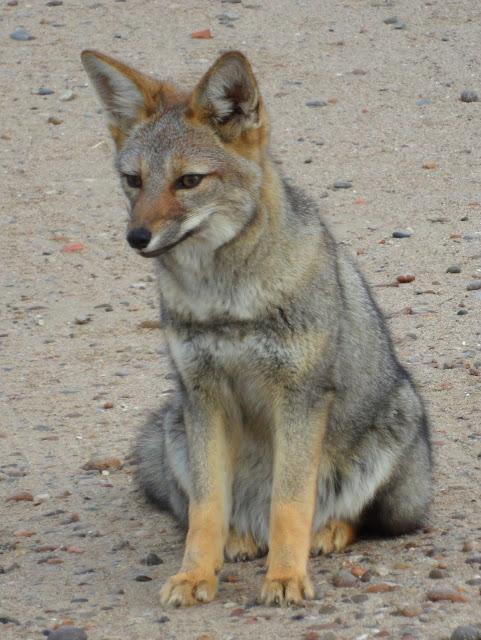 Visitar a PENÍNSULA DE VALDÉS e celebrar o êxtase da natureza selvagem | Argentina