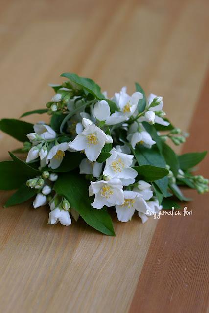 flori de iasomie alba