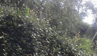 Floresta - A Cota de Reserva Ambiental – CRA na Lei 12.65112