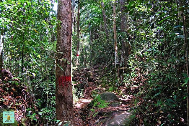 Trekkings en el Parque Nacional de Bako (Borneo, Malasia)