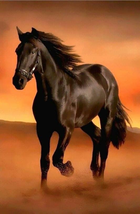 Cavalo | حصان