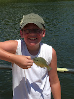 bluegill, small fish, fishing