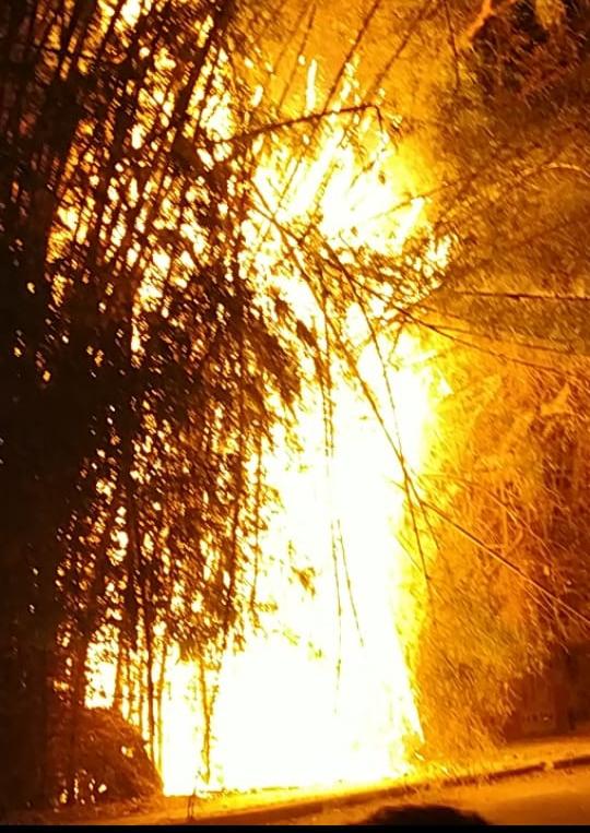 कलेक्टर बंगला की बाउंड्री के बांसों की आग ने.. आतिशबाजी का एहसास कराया, महीने भर के भीतर दोबारा भड़की आग..
