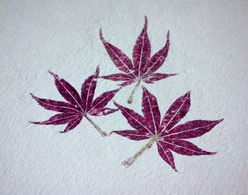 Impresiones naturales de plantas y flores en papel de acuarela8