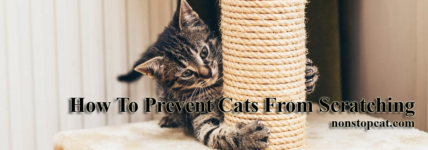How To Prevent Cats From Scratching