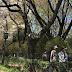 玉川上水で小金井桜を楽しむ