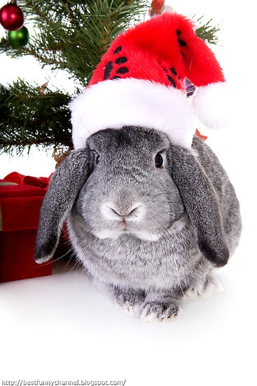 Cute Christmas bunny.