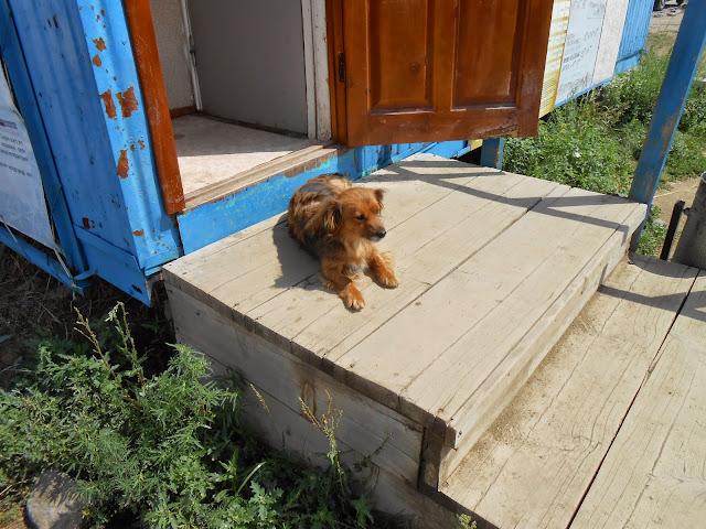 Аркаимская собака
