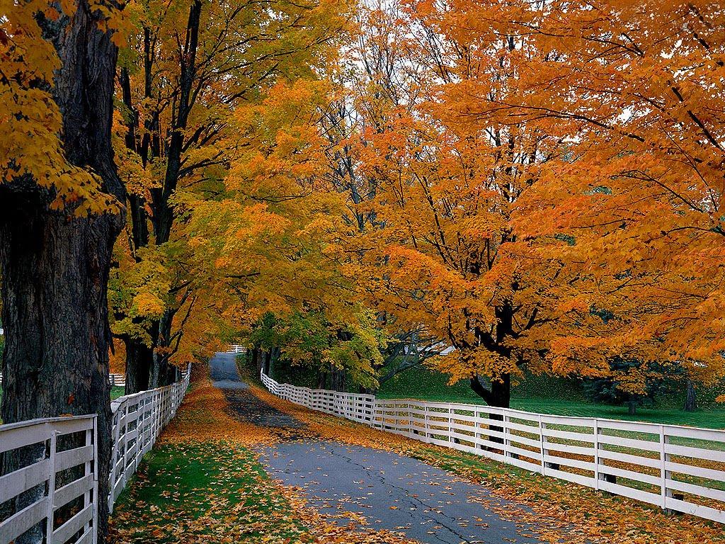 New England Fall Phone Wallpaper Thanksgiving Wallpapers Autumn Season Wallpapers
