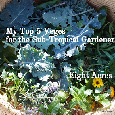 eight acres: top five vegetables for beginner gardeners in the sub-tropics