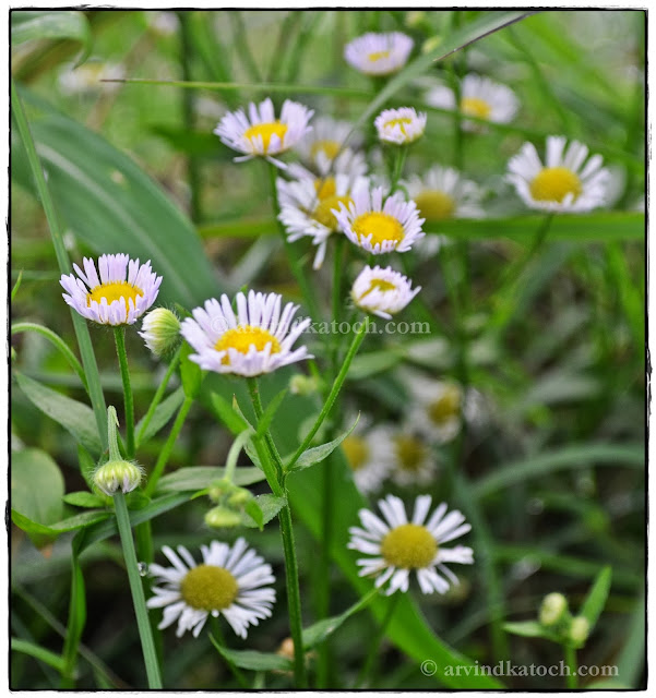 White Flowers, Forest Flowers, yellow center