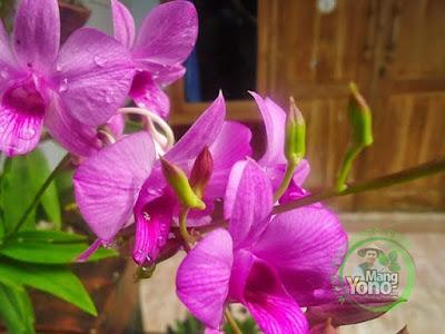 Bunga Anggrek Didepan Rumah Admin
