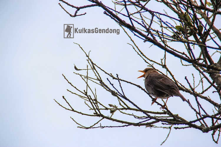 kulkasgendong.blogspot.com