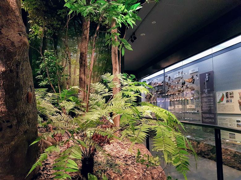 沖繩自然區展品
