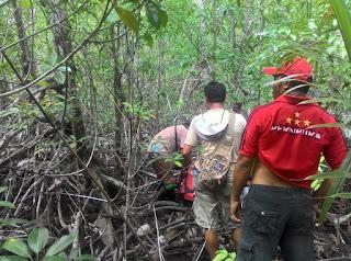 Manfaat dan Fungsi Hutan Mangrove Secara Ekonomi dan Ekologi