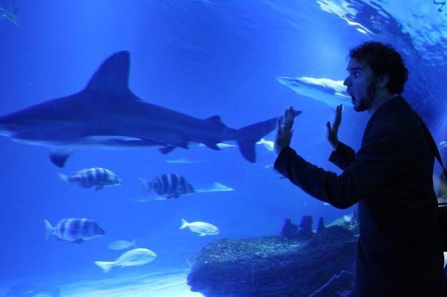 Em um dos tubos do aquário Oceanogràphic.