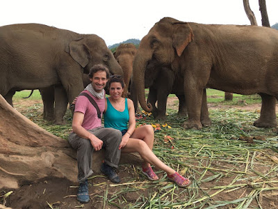 Esta ONG rescata a elefantes de la explotación en Tailandia