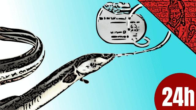 QN NEWS 24h - Dispositivos elétricos inspirados nas enguias, alimentariam órgãos artificiais