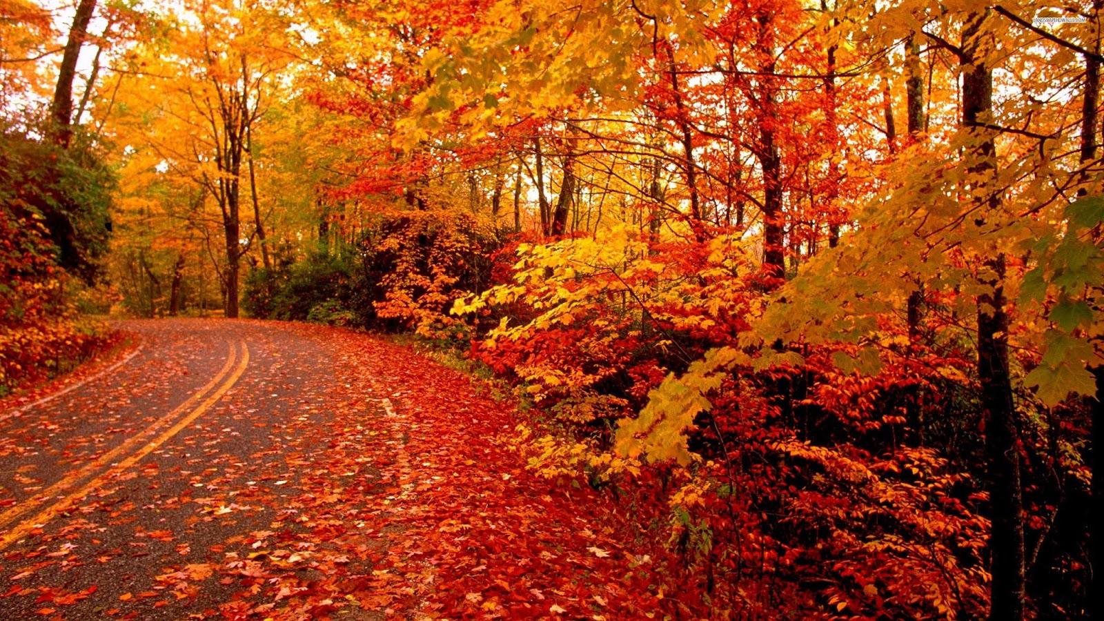 foto de Fond d'écran automne hd gratuit Fond d'écran hd