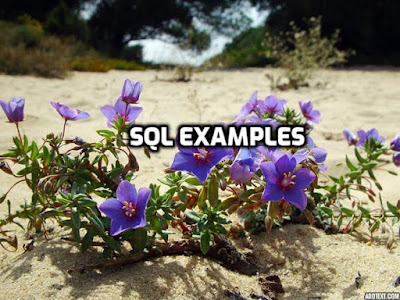 sql examples on built-in functions