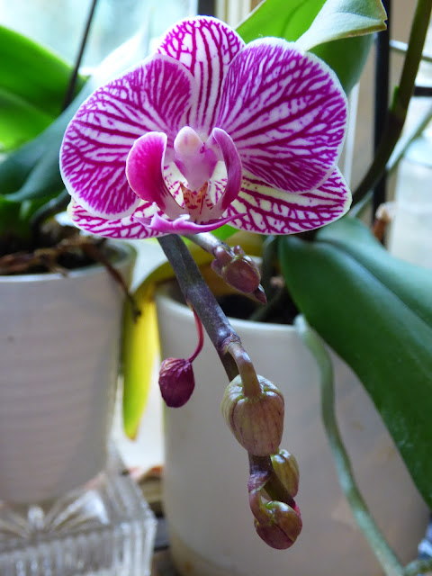 home plants, exotic plants