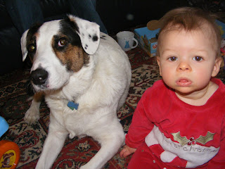 border collie cross dalmatian, first christmas, dog and baby