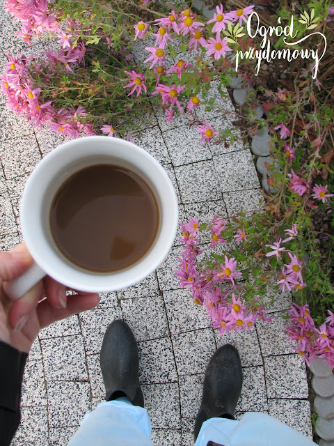 poranny rytuał, ogród przydomowy, kawa