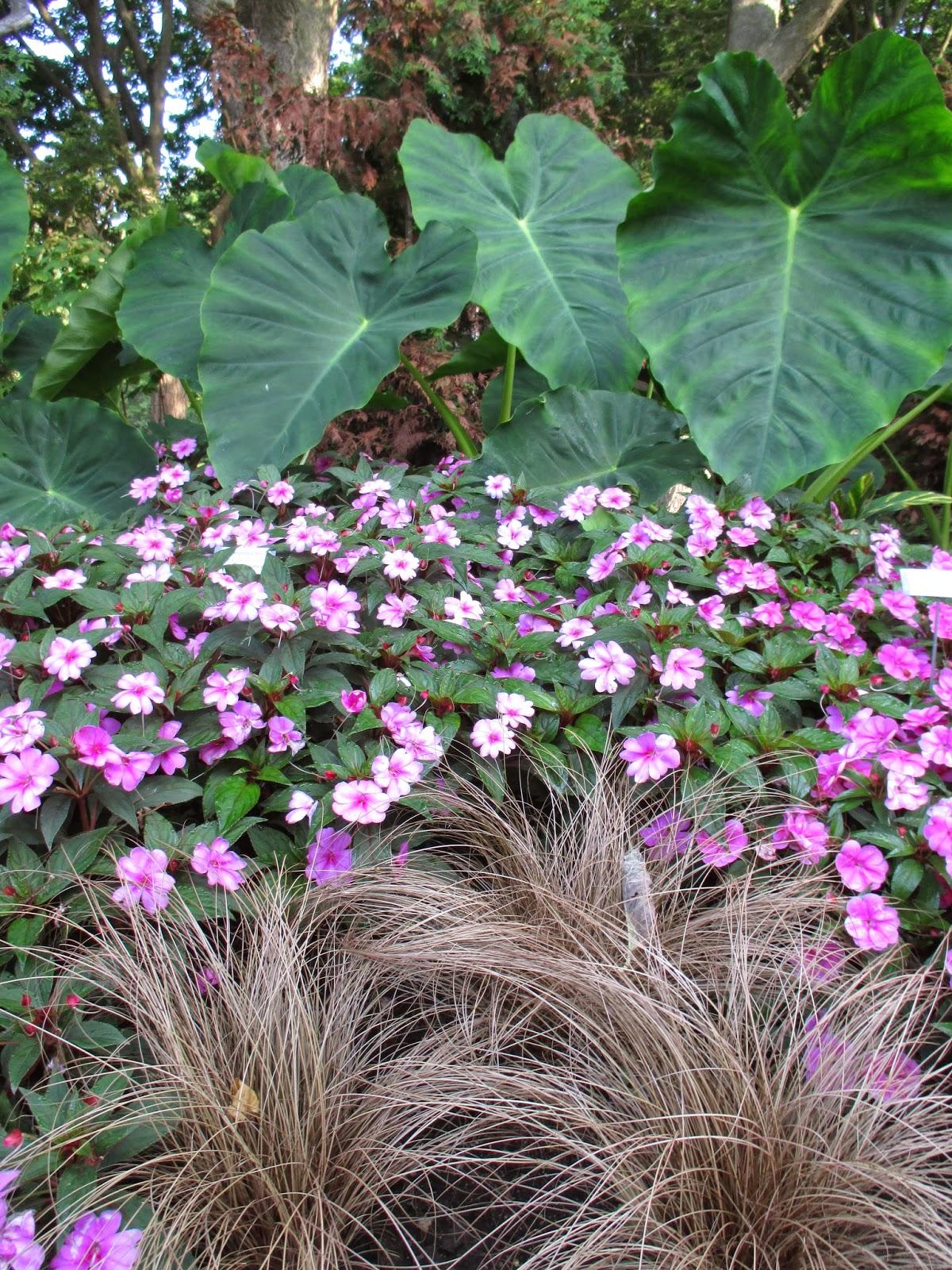 Kgk Gardening Landscape: Hort Blog: The Jungle Garden
