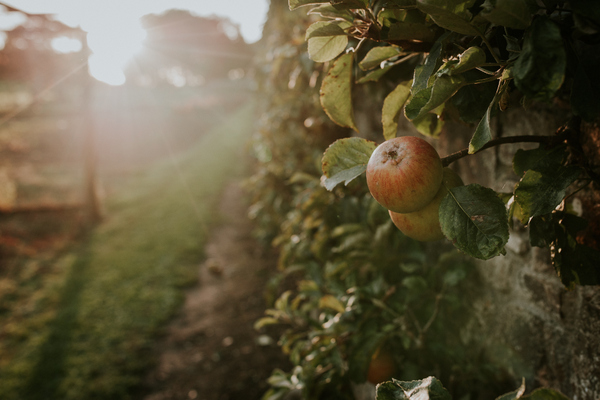 Clovelly Apple Day. Photo copyright Terry Annis (All rights reserved)