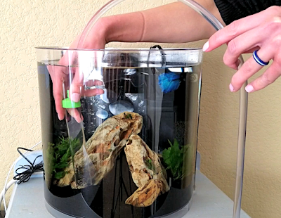 Using Python mini siphon to gravel vacuum a 3.5-gallon betta fish tank