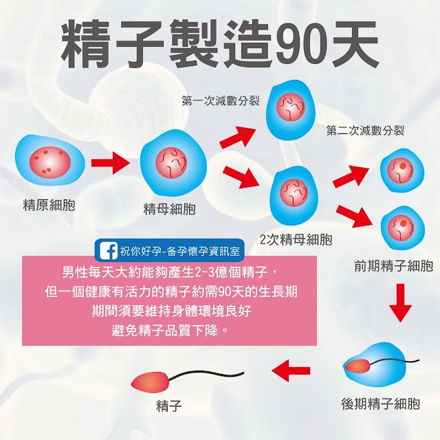 精子是如何製造出來的,精子製造90天
