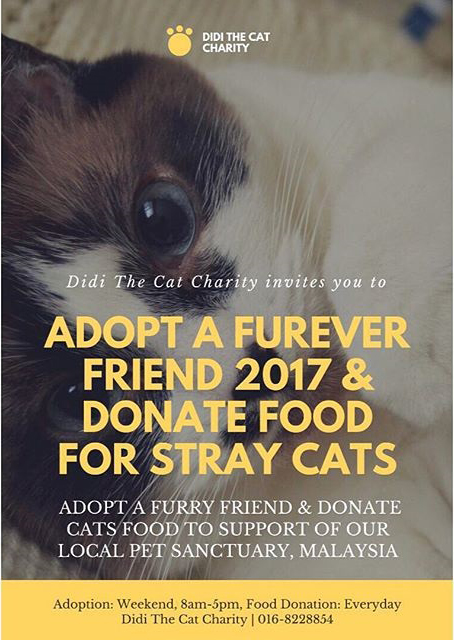 Didi The Cat Charity