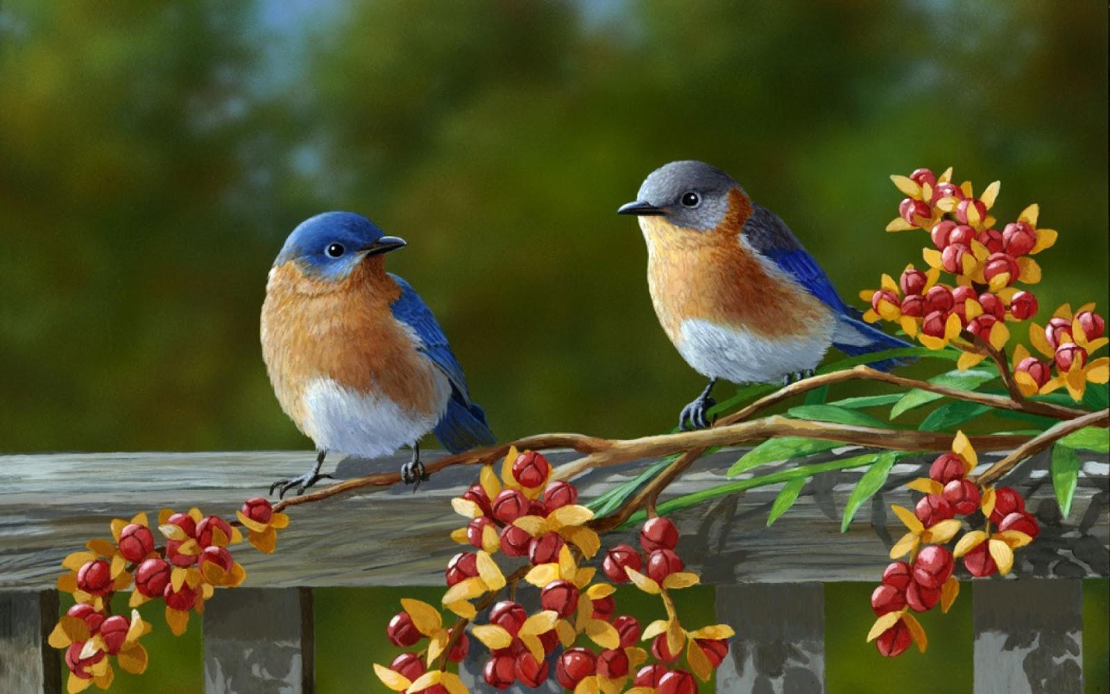 50 New Bird Wallpaper Images Pics Photos 2017 2018 Free Download