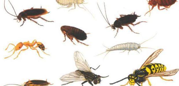 دراسة جدوى فكرة مشروع شركة مكافحة وأبادة حشرات المنازل فى مصر 2018