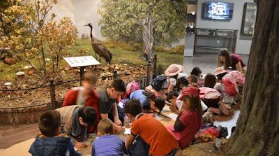 Μουσείο Φυσικής Ιστορίας Μετέωρων και Μανιταριών: Δωρεάν εκπαιδευτικά προγράμματα για 3.000 μαθητές
