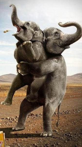 Funny Funny Pictures Funny Elephant In Circus