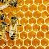 Γιατί οι βίγκαν δεν τρώνε μέλι - Συνύπαρξη