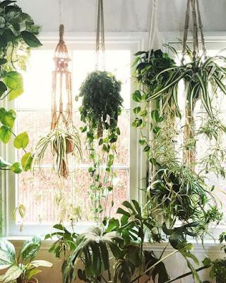 Se você dar um toque de cor de vida e muita  energia na sua casa ou apartamento porque não começar pelas plantas. A plantas dão um toque de beleza na decoração, além de  embelezar o ambiente, elas contribuem para deixar os ambientes ainda mais frescos.  Veja algumas inspirações de plantas para a decoração para a sua casa ou apartamento: