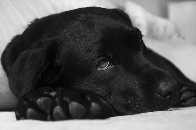 remedios caseros para la indigestion en perros