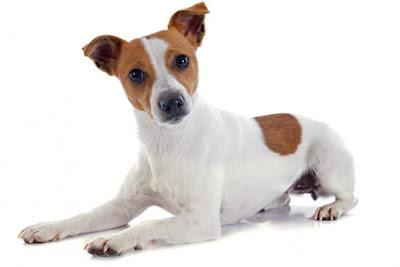 Mito perro adorable