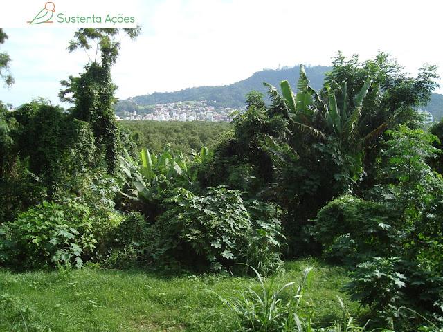 A vista da cidade e do topo das árvores revela a altura do terreno onde estávamos, que na verdade é o extinto lixão