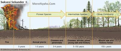 Suksesi Sekunder, SUksesi Ekologi, statistik terjadinya suksesi ekologi sekunder,