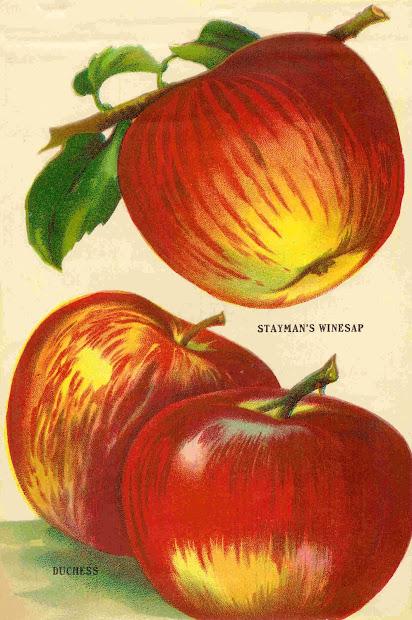 antique fruit clip art