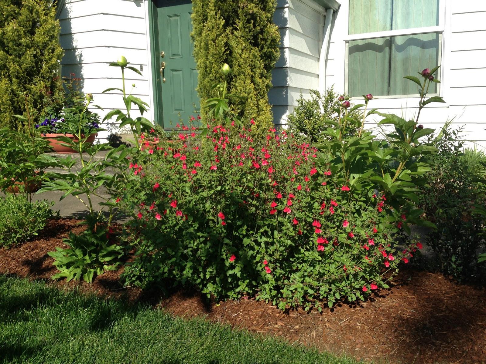 The Lents Farmer Favorite Plant In The Garden Hot Lips