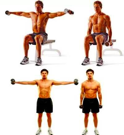 Lifts / Side openings with dumbbells.