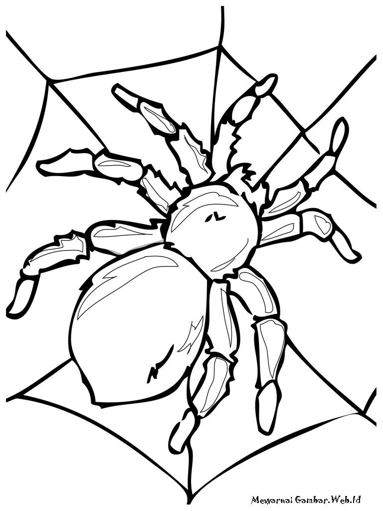 Mewarnai Gambar Serangga