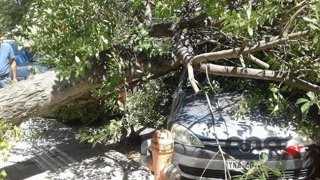 Καταστράφηκαν αυτοκίνητα από πτώση δέντρου