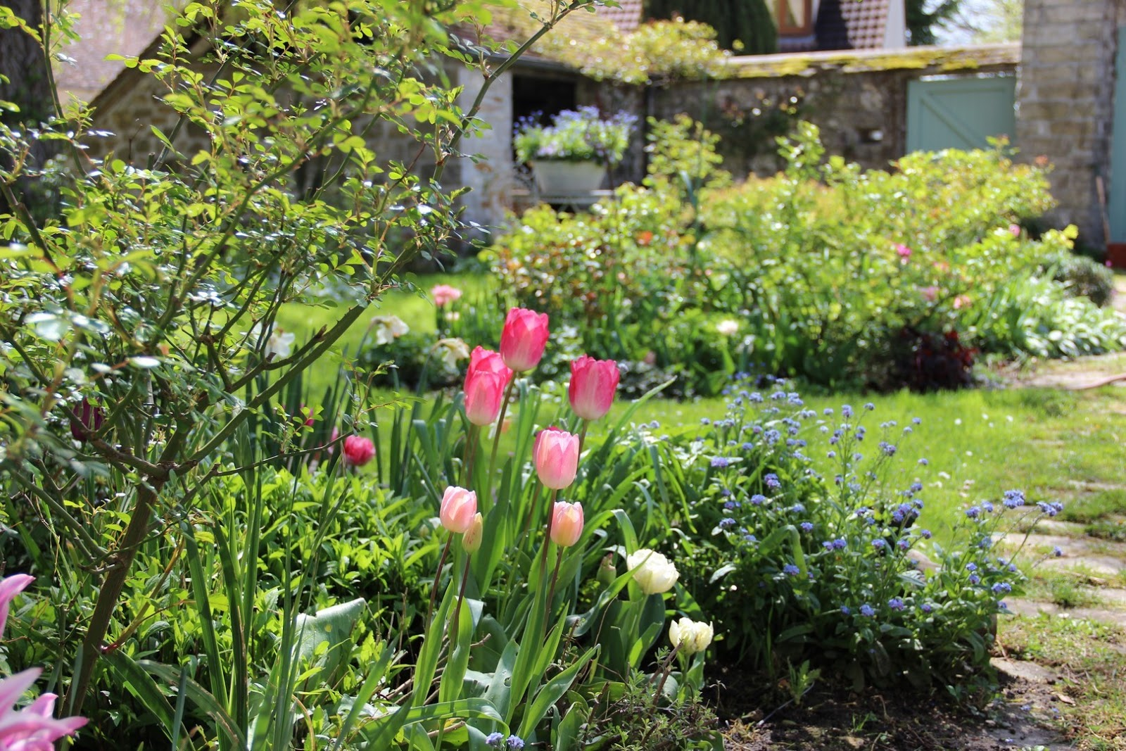 Derri re les murs de mon jardin l clat du printemps - Derriere les murs de mon jardin ...
